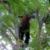 مرگ مرد جوان اندیکایی بر اثر سقوط از درخت