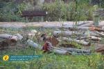 تیشه به ریشه درختان پارک محله حسین قصاب. مسئولان توضیح دهند! + تصاویر