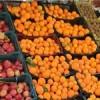توزیع میوه با نرخ دولتی در ۴ نقطه شهرستان مسجدسلیمان از امروز
