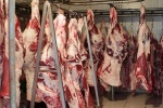 توزیع ۲ تن گوشت گرم با نرخ دولتی از امروز در مسجدسلیمان