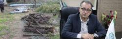 شهردار مسجدسلیمان: شهرداری به عنوان شاکی به پرونده قطع بی رویه درختان پارک محله حسین قصاب ورود خواهد کرد/قطع درختان حتی توسط شهرداری باید با مصوبه کمیسیون ماده ۷ باشد که متاسفانه این اتفاق نیفتاده است